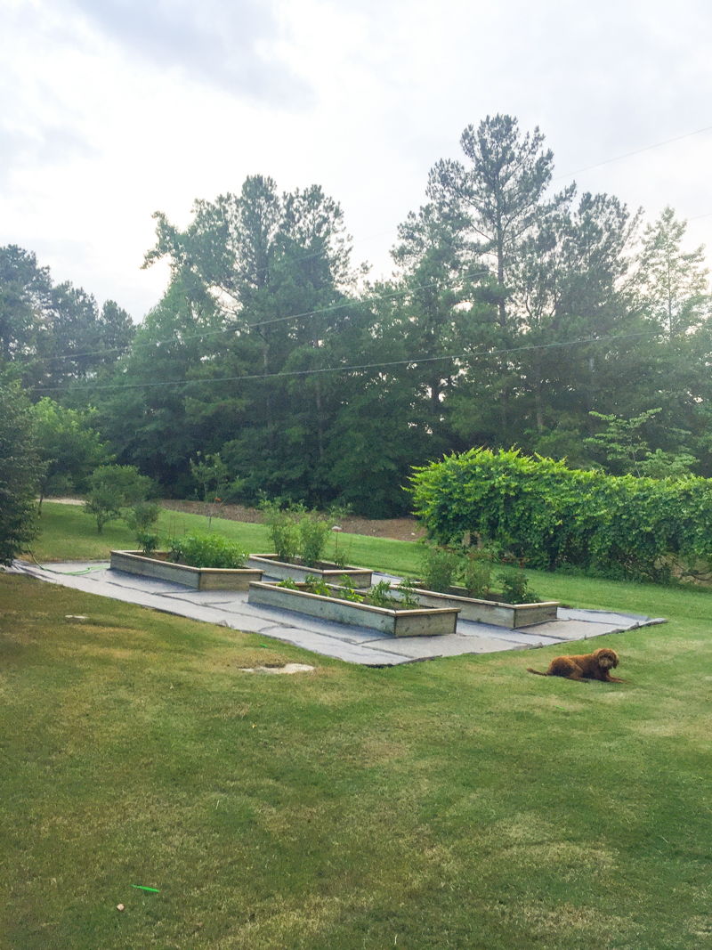 Garden 2017 - Bower Power-24
