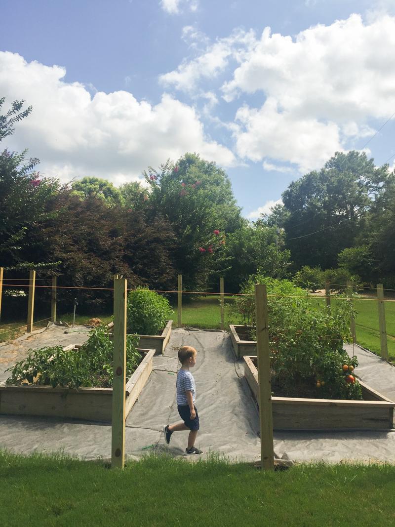 Garden 2017 - Bower Power-35